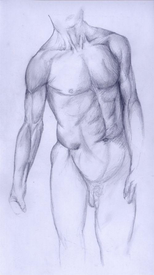 Greif Anatomie